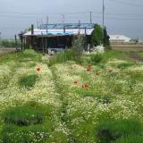 京都府地域力再生-女性のイチオシカフェ